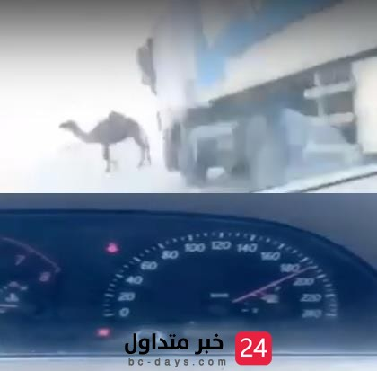 فيديو : شاب متهور يوثق وهو يقود بسرعة عالية لحظة اصطدامة بناقة على طريق سريع
